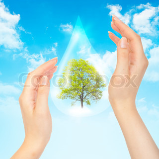 Drop of water with Tree inside and human hands The symbol of Save Green Planet