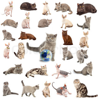 Collection of a cats in different poses isolated over white background