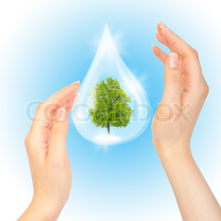 Drop of water with Tree inside and hands The symbol of Save Green Planet