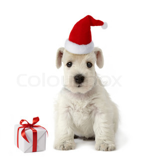 puppy and christmas gift