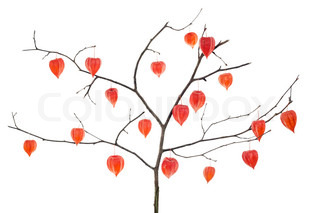 RedChinese LanternsRed Hearts flowerson tree branches-Red Hearts Tree concept Isolated