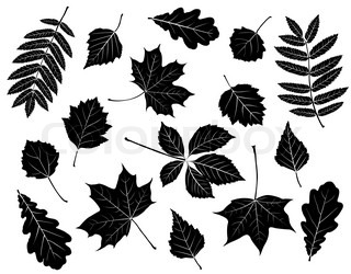 Set of silhouettes of leaves Maple, oak, mountain ash, birch, aspen, wild grapes, poplar and hawthorn Isolated on white