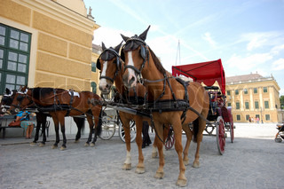 Horse driven cabs at the Schonbrunn Palace in Vienna, Austria