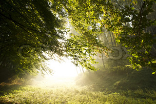 Strong sun rays through tall branches of trees in autumn