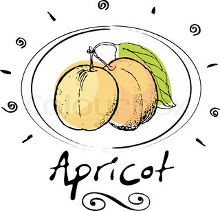 hand drawn apricot in vignette