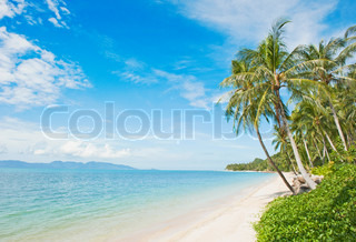 Smuk tropisk strand med kokos palme
