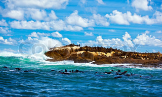 South African seals, wild colony in Atlantic ocean, beautiful seascape with animals, sea life of African continent, eco tourism, adventure travel, wildlife safari