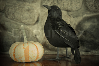 pumpkin black crow halloween background