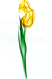 yellow tulip from smoke