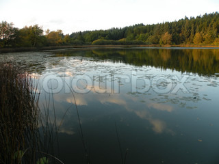 pink clouds mirroring in a lake surrounded by trees
