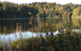 lake surrounded by trees mirroring in water in fall