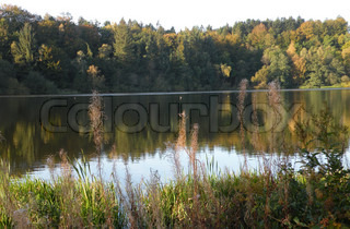 trees mirroring in a lake in fall, automn