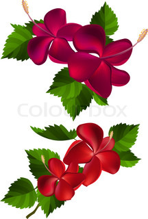 Collection of different flowers and leaves on white | Stock Vector ...