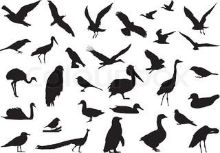 Schatten der Vögel erstellt eine Zeichnung erstellt von echten fotografieren Vögel