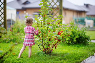 Little girl picking red currants under a rain