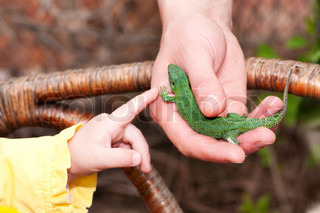small green lizard in the hands