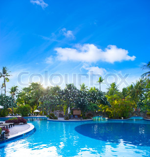 swimming pool surrounded by lush tropical plants