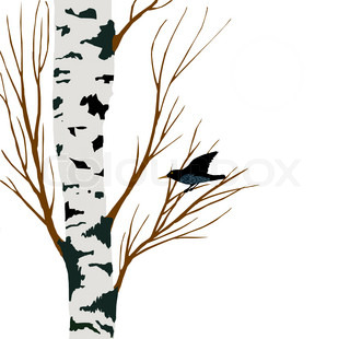 starling on birch drawing