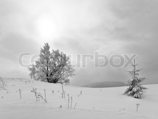 winter dull calm mountain landscape with snowy trees on hill and sun through clouds black-and-white photo