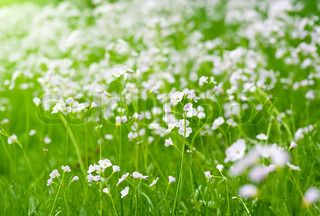 Cardamine pratensis is a flowering plant in the family Brassicaceae, native throughout most of Europe and Western Asia