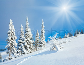winter rime and snow covered fir trees on mountainside on sky with sunshine background