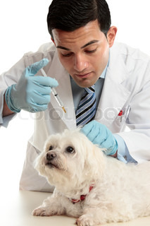 An expert veterinarian medicating a small dog using a syringe needle to the back, scruff of the neck
