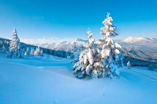 winter rime and snow covered fir trees on mountainside Carpathian Mountains, Ukraine