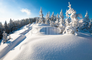 Morning winter calm mountain landscape with beautiful fir treeson slope Kukol Mount, Carpathian Mountains, Ukraine