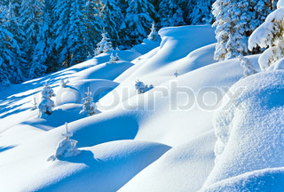 Snowdrifts on winter snow covered mountainside and fir trees on hill top