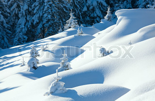 winter calm mountain landscape with beautiful fir treeson slope Kukol Mount, Carpathian Mountains, Ukraine