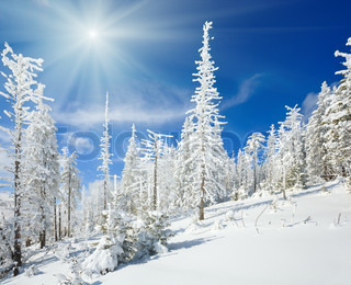 winter snow covered fir trees on mountainside on blue sky with sunshine background