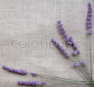 Bunch of lavender flowers on sackcloth background