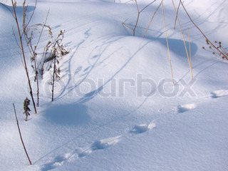 Small animal tracks in the freshly fallen snow