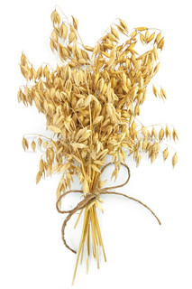 Sheaf of stalks of oats, tied with twine isolated on white background