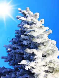 Christmas tree covered with snow over blue sky