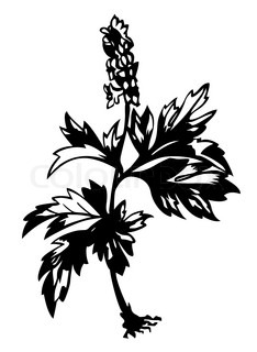 field flower silhouette on white background