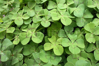 natural green background from the fresh leaves
