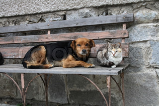 cat and dog are resting together love