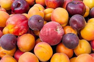 Pile of colorful summer fruits - apricots, nectarines, peaches, plums and