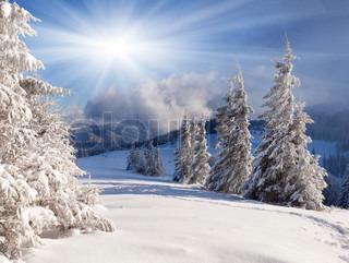 Smukke vinterlandskab med snedækkede træer