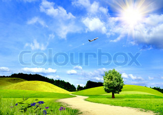 Beautiful field with a green grass and the blue sky
