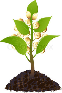 Young plant with golden coins, Isolated On White
