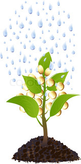Money tree with golden coins and water drops, Isolated On White