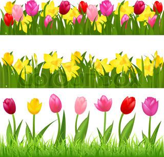3 Flower Grænser Fra tulipaner og Narcissuses , isoleret på hvid baggrund , Vector Illustration
