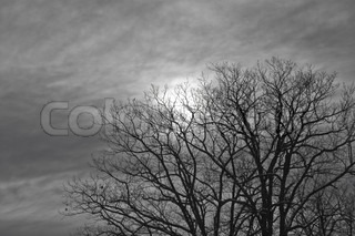 night moon shines through the clouds and trees