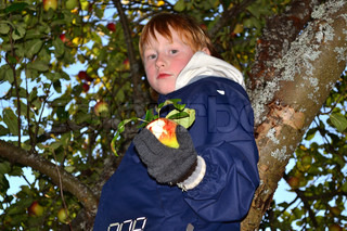 Boy standing in the tree crown and stretching an apple