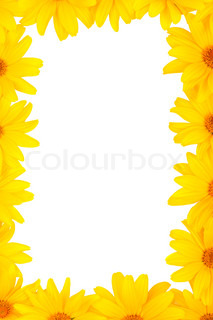 The beautiful frame of yellow flowers