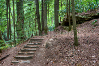 Old stone stair in the mystic woods