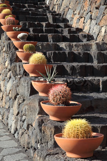 Cactuses at the volcanic steps, Lanzarote Spain