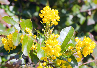 Beautiful spring plant with yellow flowers macro